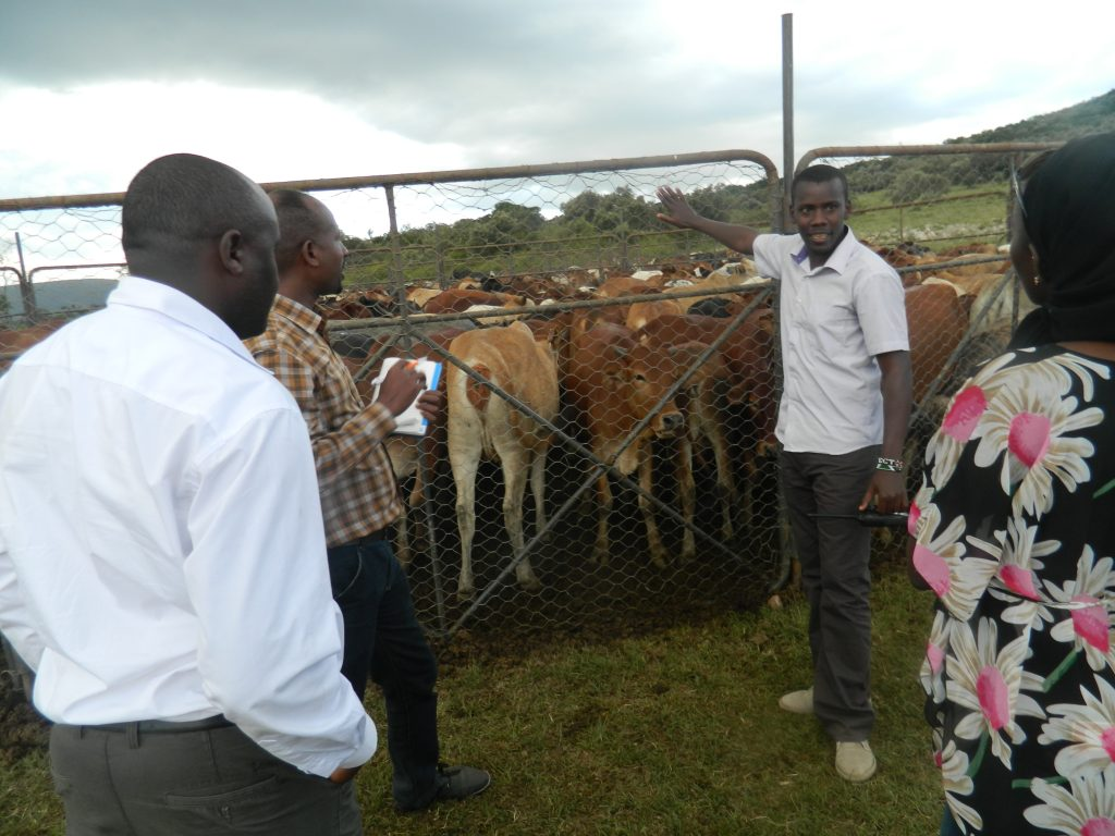 Rehabiliattion of the grazing lands using livestock. The head of Mara ranch explains the concept to the team