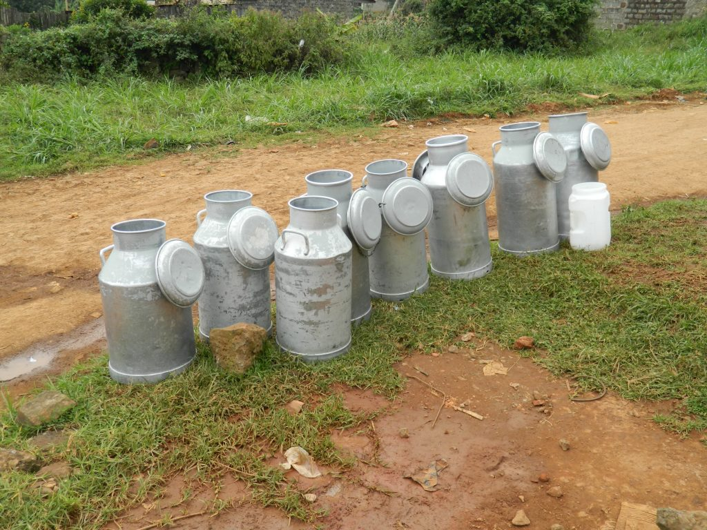 Informal milk market involves collecting of milk from farmers. This is not always hygienic