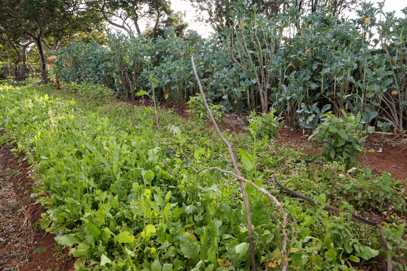 Propelling Kenya's food production during and post Covid-19